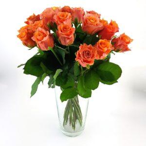 Rosen 20 Orange Hoch