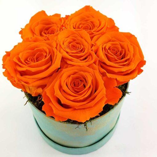 Ewige Rosen 6er Orange2