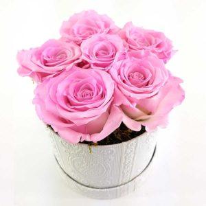 Ewige Rosen 6er Rosa2