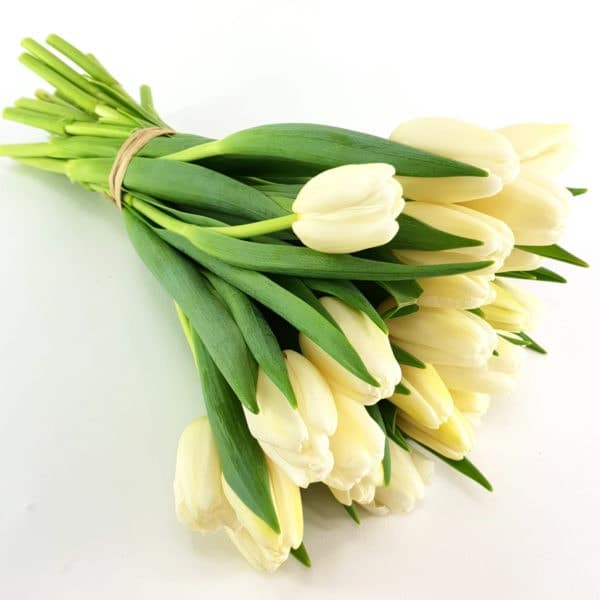 Tulpen in creme