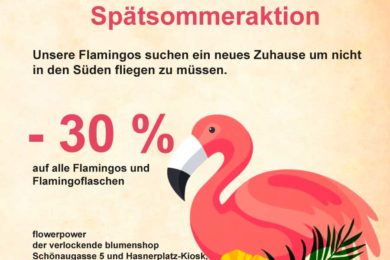 Spätsommeraktion auf Flamingos