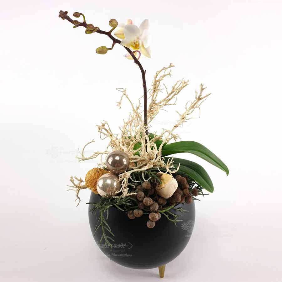 Phalaenopsisdeko