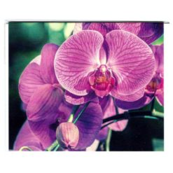 Karte mittel Orchidee lila
