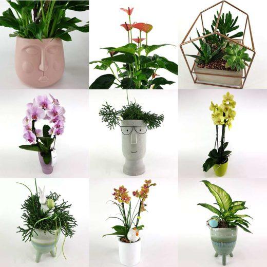 Neu im Webshop: Topfpflanzen