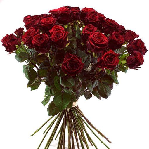 50 Rosen Red Naomi
