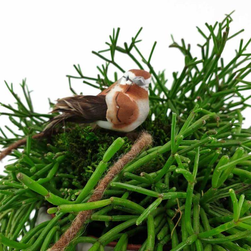 Pflanzkopf Vogel
