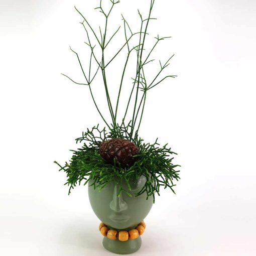 Pflanzkopf Rhipsalis Grün